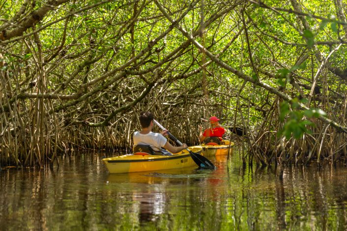 image of two people kayaking in the everglades